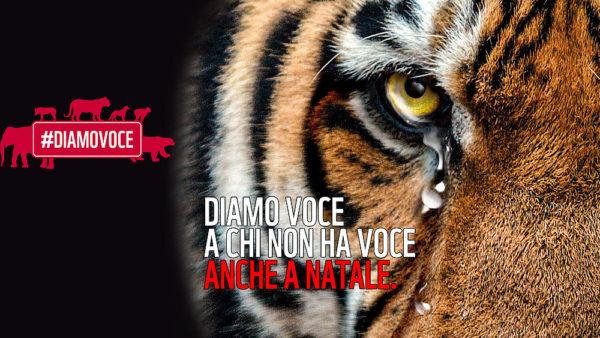 Contributo informativo, per il raggiungimento della missione del WWF tramite la divulgazione di materiale utile per difendere gli ambienti e le specie in pericolo. Si ringrazia la Cooperativa Faber per la collaborazione